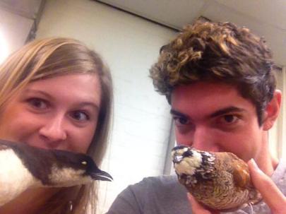we like birds