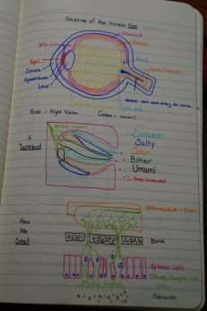 Olfaction and Gustation