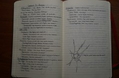 Notes on Protists