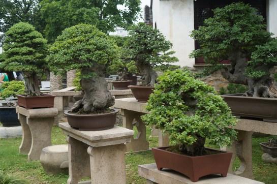 Bonsai Tree Garden