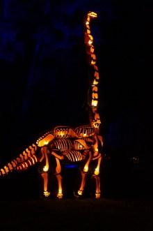 Branchiosaurus?