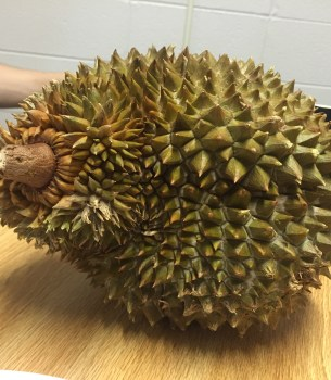 Never Make a Durian Smoothie… Or Anything Durian Flavored, For That Matter.