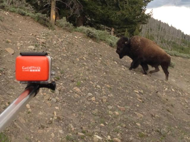 Yellowstone National Park Bison GoPro