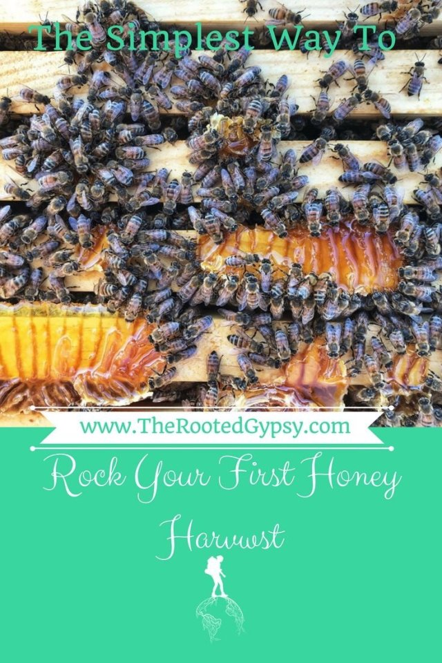 The Simplest Way to Rock Your First Honey Harvest