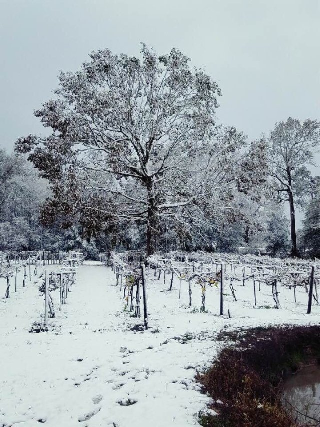 Rare Snow fall at Free State Cellars
