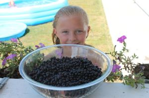 My granddaughter Sophie helped pick berries.