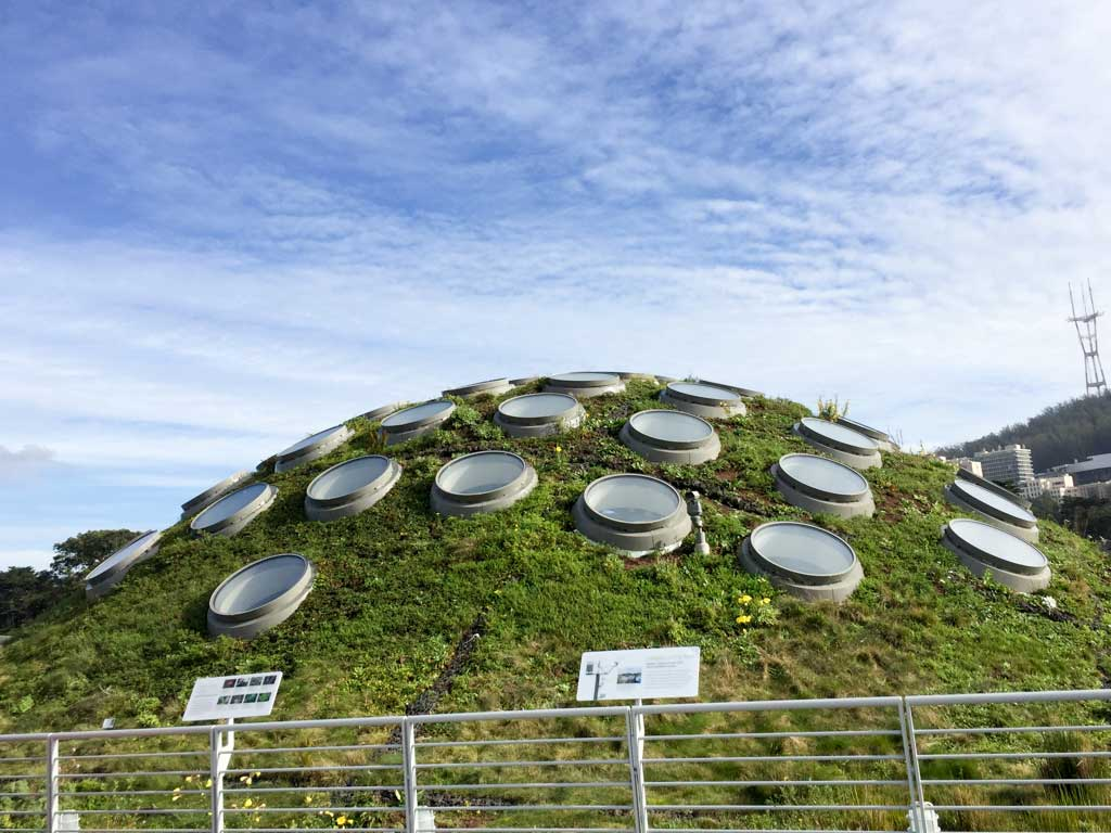 The Living Roof - one of the most recognized views in the whole museum!