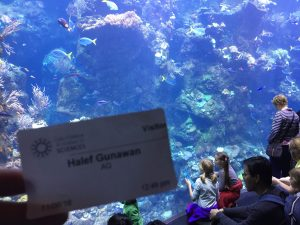Steinhart Aquarium - San Francisco. My visitor's pass.