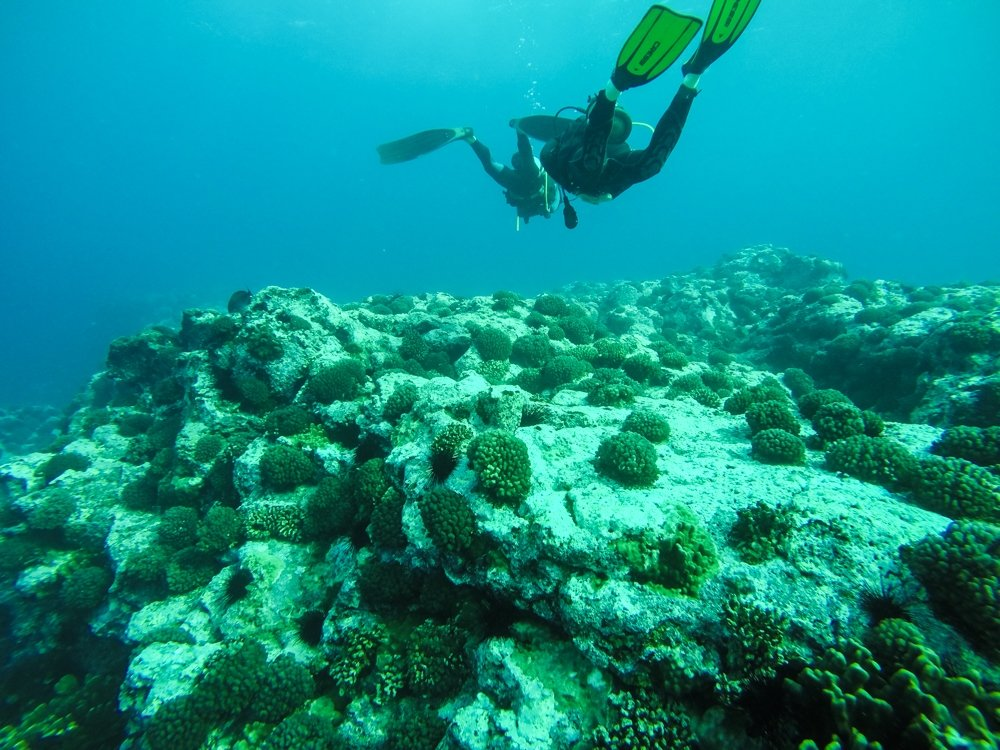 scuba diving over corals