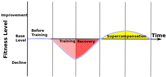 The three phases of training, recovery and supercompensation