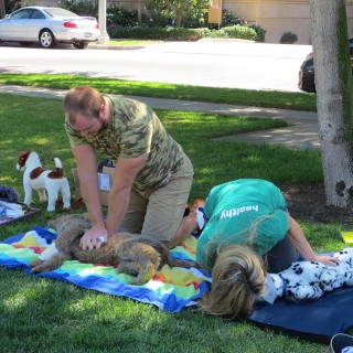 pet first aid training, pet first aid class, dog first aid, pet CPR, dog CPR