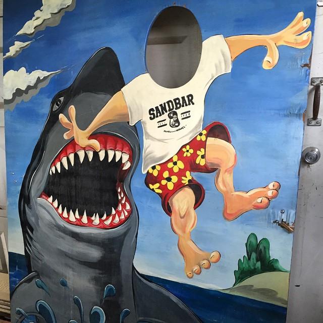 Sandbar shark board