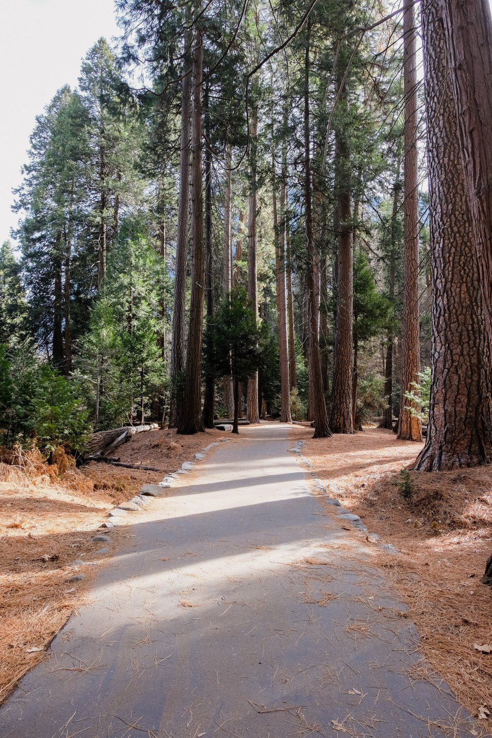 Footpath // Things To Do in Yosemite in Winter