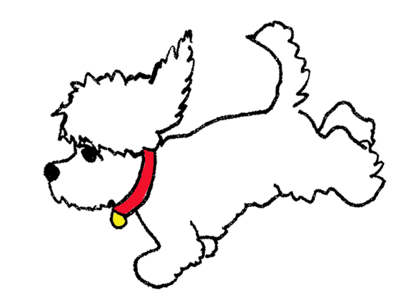 COLTON, the Diabetes Alert Dog