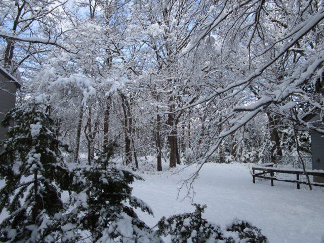 sapporo attractions in winter