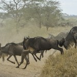Three Reasons Why an African Safari is Worth the Hype