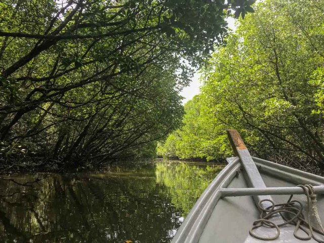 Kilim Geoforest Park 2 days in Langkawi itinerary