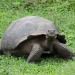 Visiting the Galapagos Islands – when is the best time to travel?