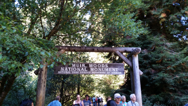 Muir-Woods-best-day-trip-from-san-francisco