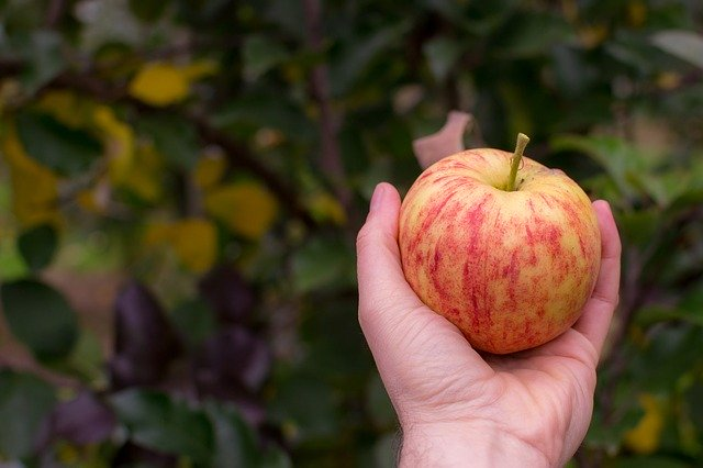 apple picking orchards near Chicago