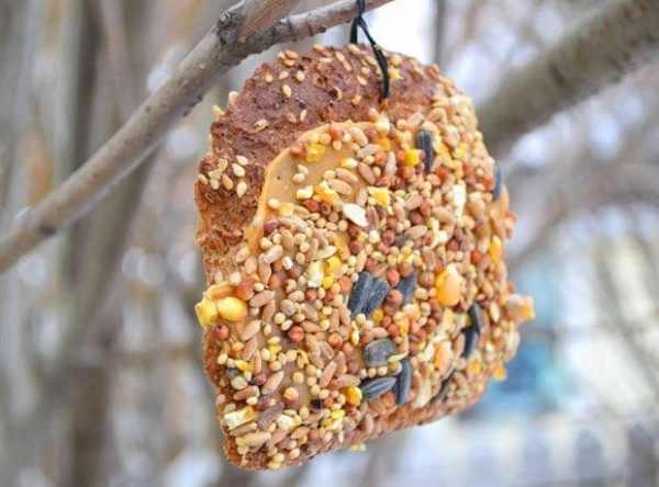 25 Best Homemade Diy Bird Feeders For All Kinds Of Yards