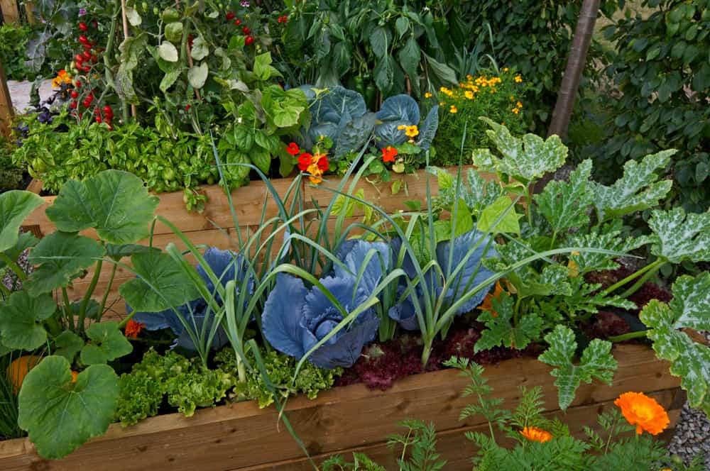 blue plants raised gardens