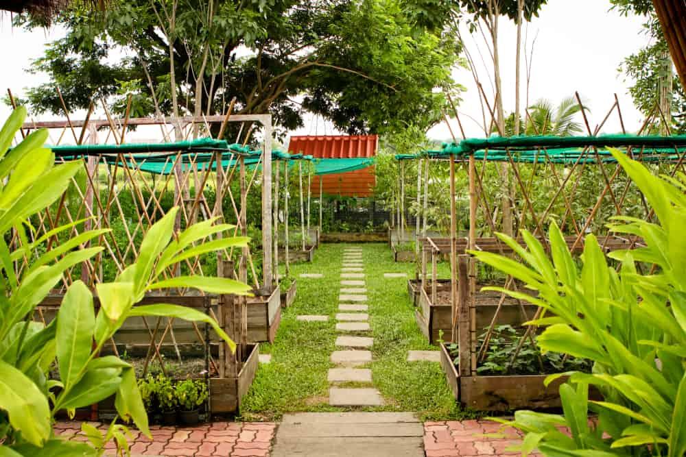 rows of gardens tarps