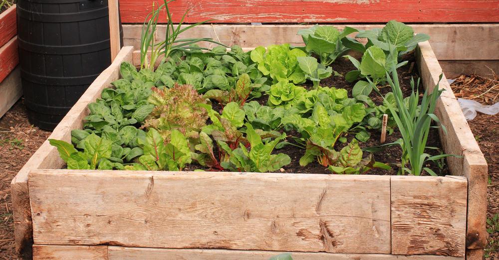 simple wood raised garden