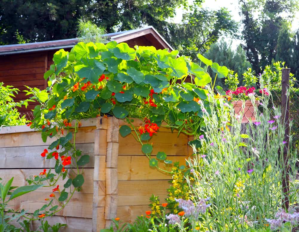 high linked wood garden