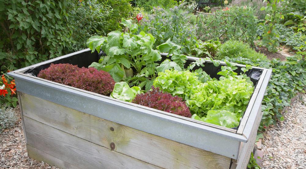 lipped raised garden