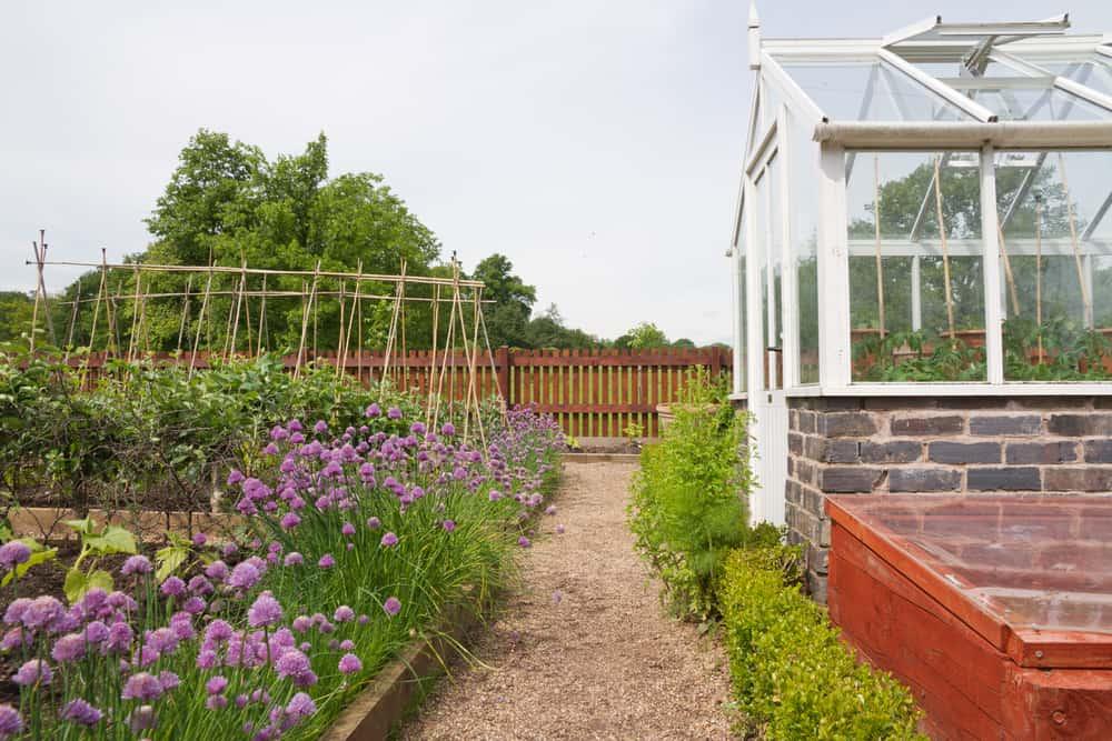 purple flowers low gardens