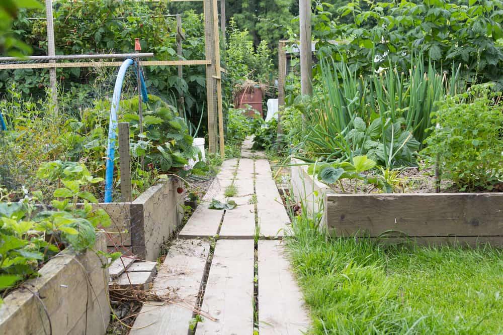 plank path multiple gardens