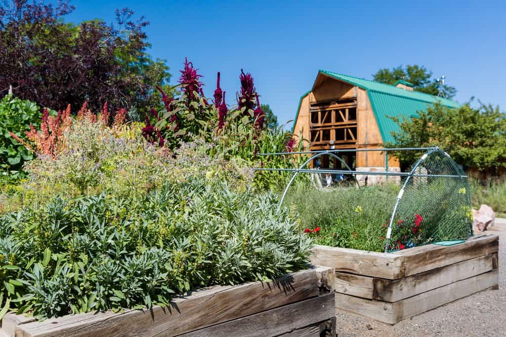 farmhouse raised garden
