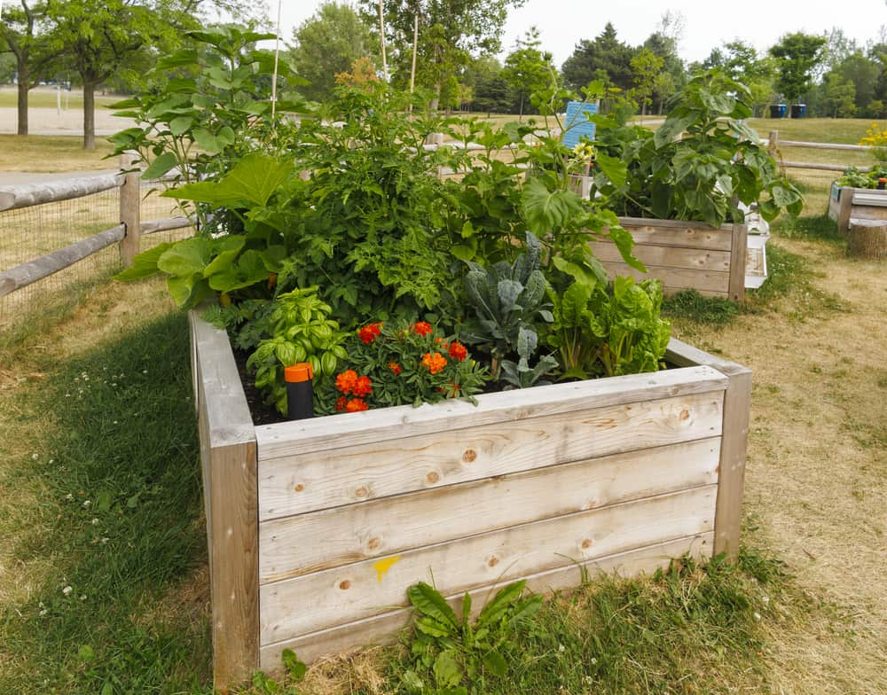 light light wood garden box