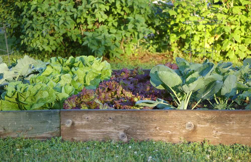 low single plank raised garden