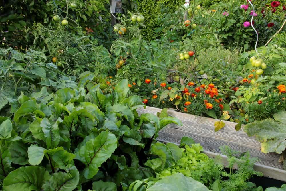 immersive garden grey raised