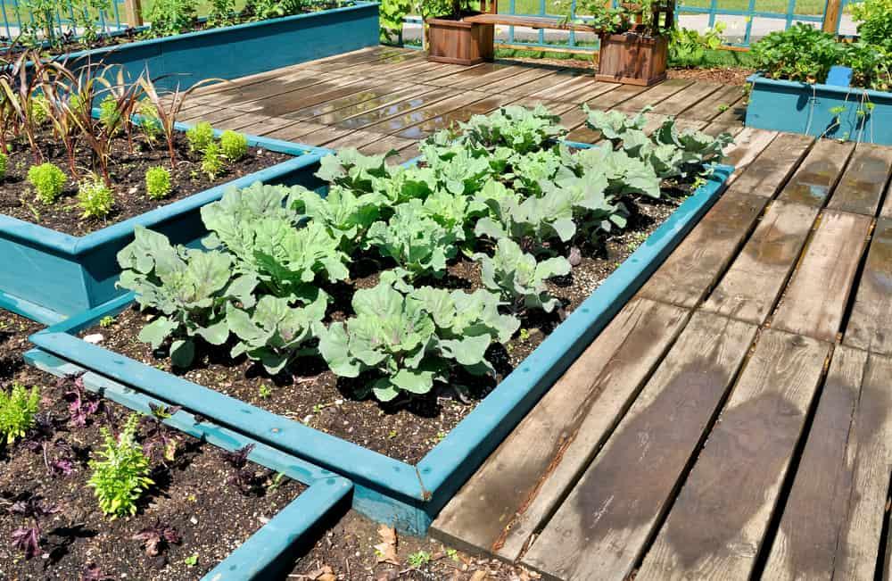blue wood raised garden