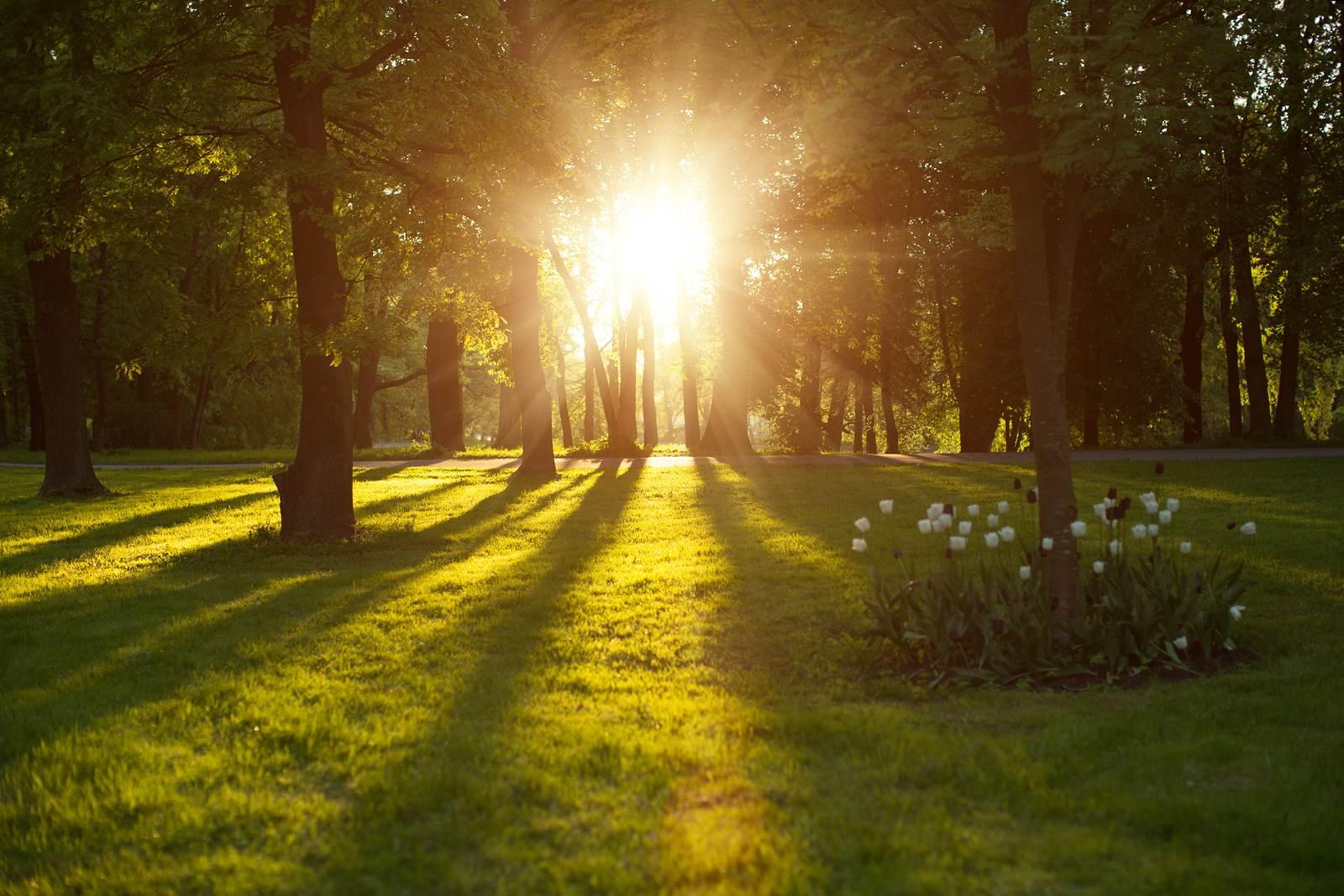 Natural Light Sources For Kids