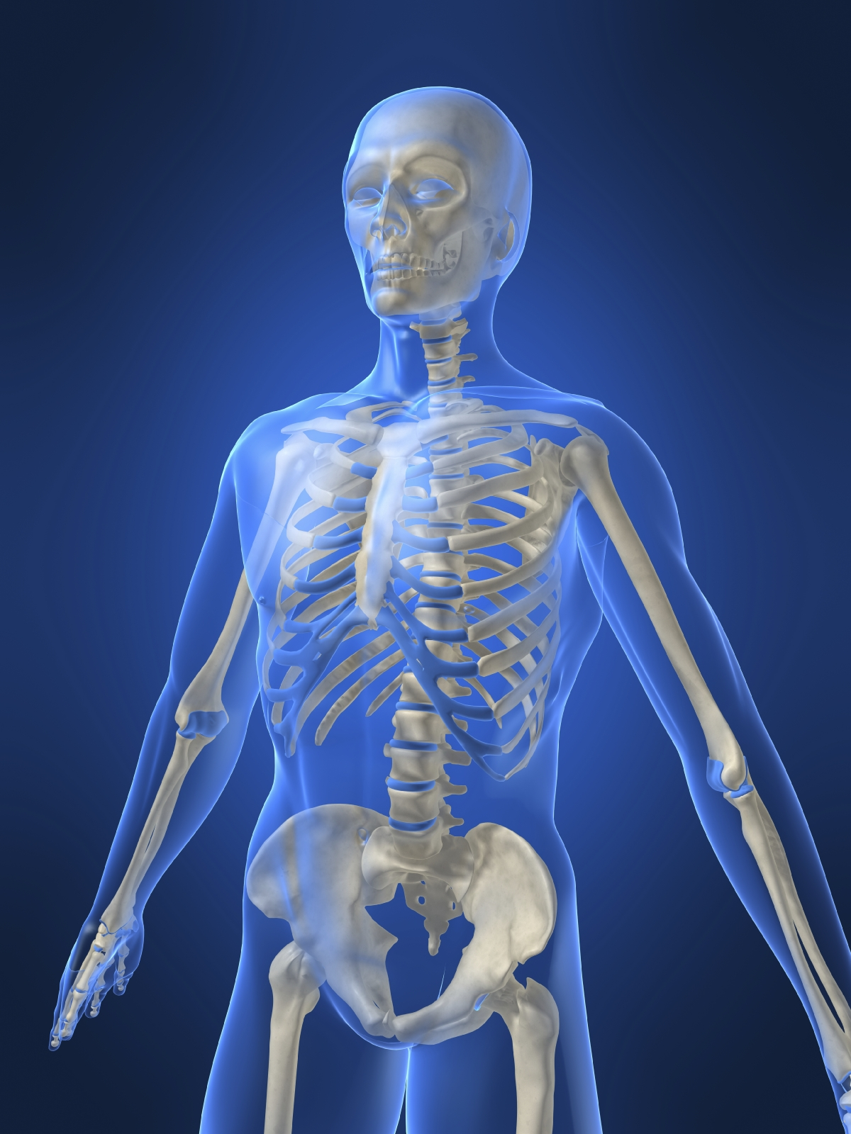 Bones And Muscles Homework Help