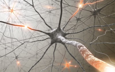 The Cognitive Elements of Neural Plasticity