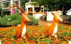 Portland Pioneer Deer