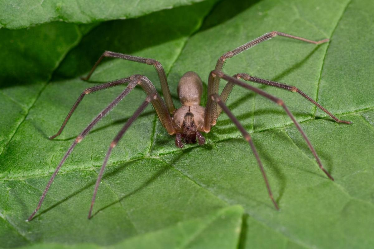 cause and effect fear of spiders