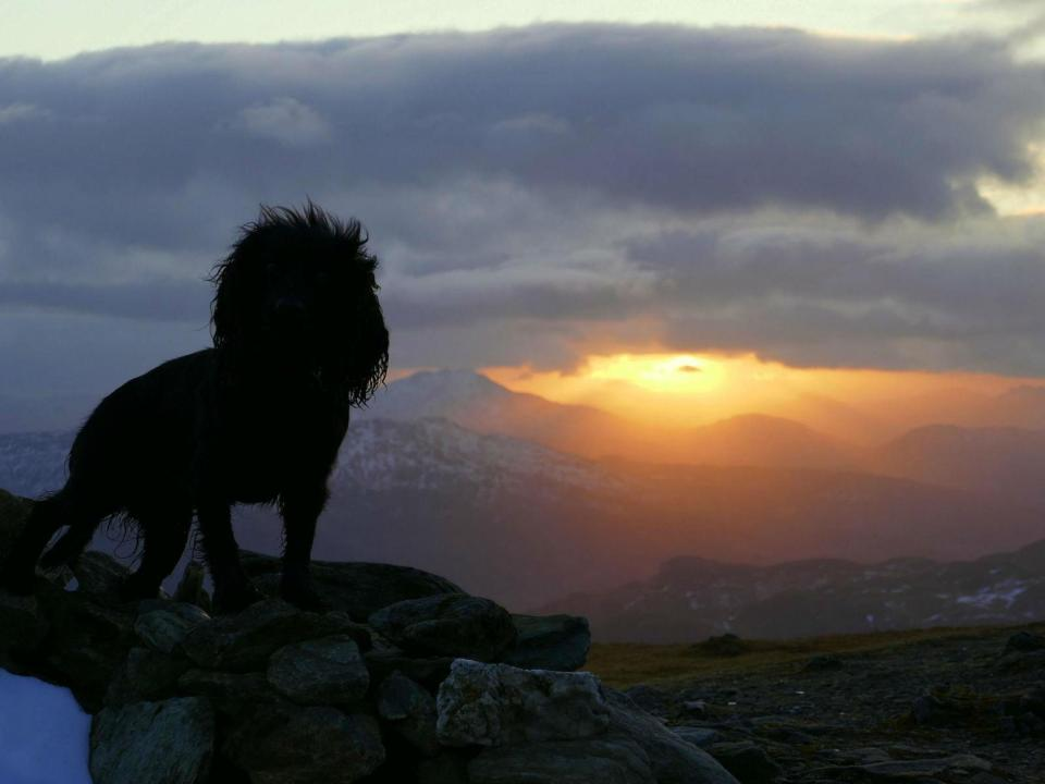 Owners Snap Of Dog On Perthshire Mountain Is Dead Ringer