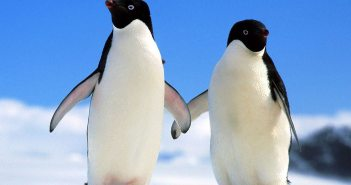 Penguins at The Scuba News
