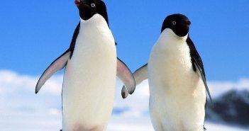 Penguins at The Scuba News