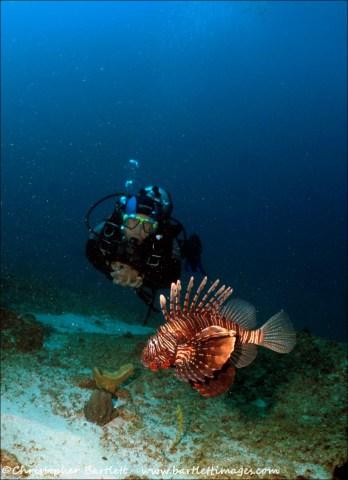 Lionfish observation