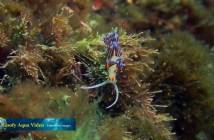 Goofy Aqua Video - Spain