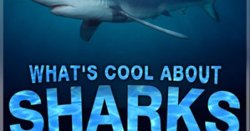 What's Cool About Sharks at The Scuba News
