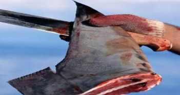 Stop Shark Finning at The Scuba News