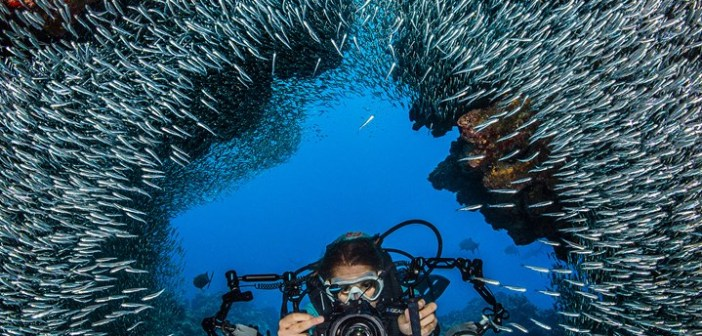 An underwater photographer moves through the schooling silversides at Devil's Grotto in Grand Cayman. Photo by Alex Mustard